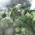 Les arbres des vies...